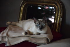 Gato/charla Imagen de archivo libre de regalías