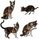 Gato-Chita Fotos de Stock Royalty Free