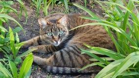 Gato chocado Imagen de archivo libre de regalías