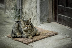 Gato ciego Fotos de archivo libres de regalías