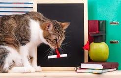 Gato científico Fotos de archivo