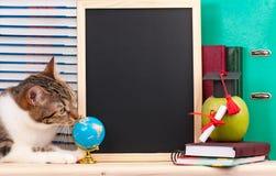 Gato científico Imágenes de archivo libres de regalías