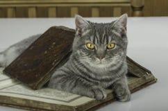 Gato científico con los libros en la tabla Imágenes de archivo libres de regalías