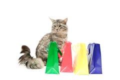 Gato cinzento com compras imagens de stock royalty free
