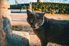 Gato cinzento disperso imagem de stock royalty free