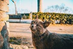 Gato cinzento disperso imagens de stock
