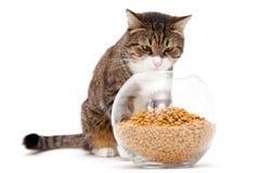 Gato cinzento e alimento seco imagens de stock royalty free