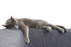 Gato cinzento em um sofá foto de stock