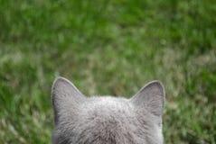 Gato cinzento no fundo da grama verde Imagem de Stock Royalty Free