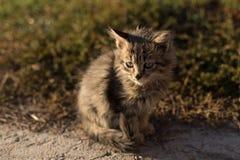 Gato cinzento pequeno Foto de Stock