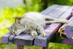 Gato cinzento que dorme no close-up do banco de madeira imagens de stock