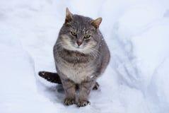 Gato cinzento que senta-se na neve em um passeio na rua Imagens de Stock