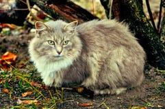 Gato cinzento que senta-se perto dos arbustos Fotografia de Stock Royalty Free