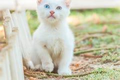 Gato coloreado dos del ojo Imágenes de archivo libres de regalías