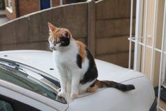 Gato coloreado multi que se sienta en el vehículo Imagenes de archivo