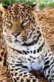 Gato colorido imagens de stock royalty free
