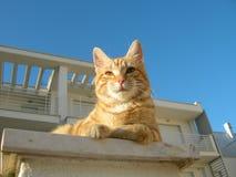 Gato colorido Brindle imagens de stock