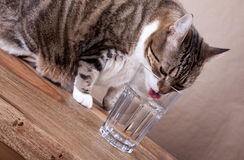 Gato com água Foto de Stock Royalty Free