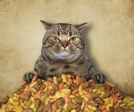 Gato com alimento seco 2 fotos de stock