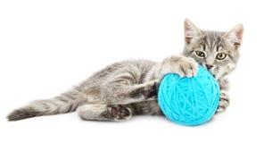 Gato com a bola do fio Imagem de Stock Royalty Free