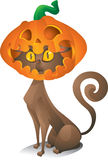 Gato com cabeça da abóbora Imagem de Stock