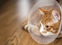 Gato com cone em um assoalho imagens de stock