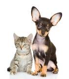 Gato com do cão um olhar atentamente na câmera foto de stock