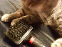 Gato com a escova escovar foto de stock