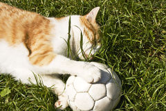 Gato com esfera de futebol Fotografia de Stock Royalty Free