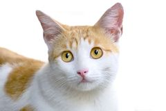 Gato com expressão triste Fotografia de Stock