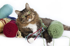 Gato com fio fotografia de stock