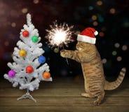 Gato com fogo 2 de Bengal fotografia de stock