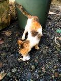 Gato com fome Imagens de Stock Royalty Free