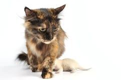 Gato com gatinhos fotos de stock