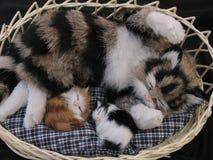 Gato com gatinhos Imagens de Stock