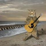 Gato com a guitarra na praia Imagem de Stock