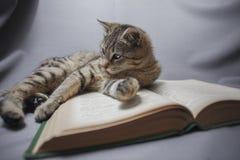 Gato com livro aberto Fotos de Stock