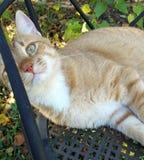 Gato com o olho escondido Imagem de Stock Royalty Free