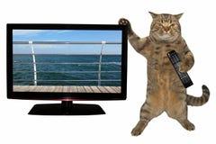Gato com o telecontrole perto da tevê 2 fotografia de stock royalty free