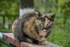 Gato com olhos doentes. Fotos de Stock