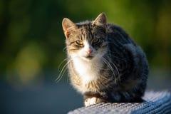 Gato com olhos verdes imagens de stock royalty free
