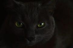 Gato com olhos verdes Fotos de Stock Royalty Free