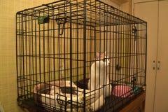 Gato com os gatinhos no abrigo animal Fotos de Stock