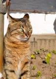 Gato com os olhos verdes surpreendentes foto de stock royalty free