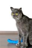Gato com pé quebrado Imagens de Stock Royalty Free