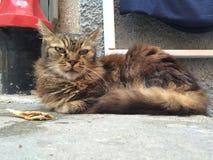 Gato com peixes ao descansar no porto de Vernazza imagem de stock royalty free