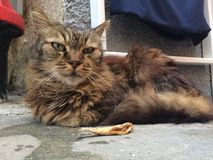 Gato com peixes ao descansar no porto de Vernazza imagem de stock