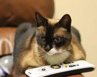 Gato com telecontrole. planeta animal de observação? Imagem de Stock