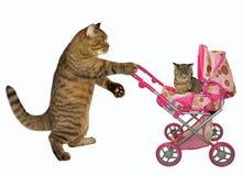 Gato com um carrinho de criança imagem de stock