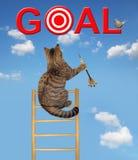 Gato com um dardo em uma escada imagens de stock